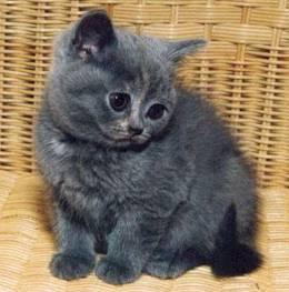 blueline pentukuvia 2 kitten photos 2. Black Bedroom Furniture Sets. Home Design Ideas